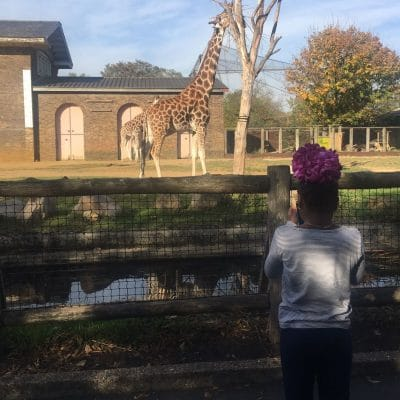 JRS UK goes to the Zoo